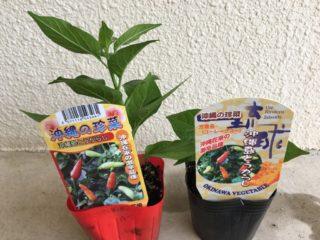 2本の苗の商品ラベルが見える表側写真