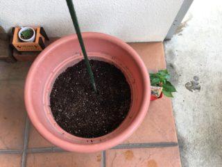 植え付け前に支柱を立てたところ