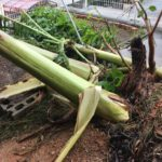 台風24号の猛威!