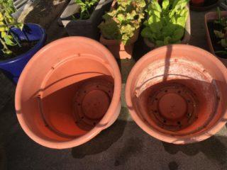 洗った鉢を日干し